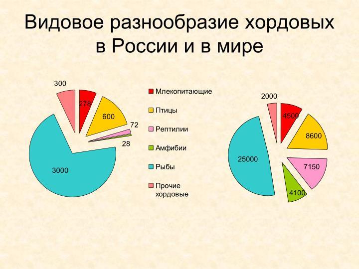 Видовое разнообразие хордовых в России и в мире