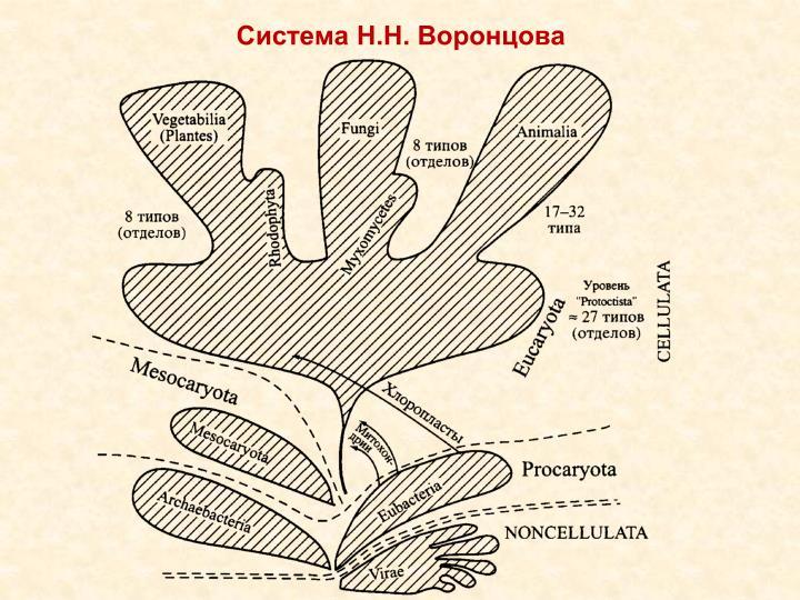 Система Н.Н. Воронцова