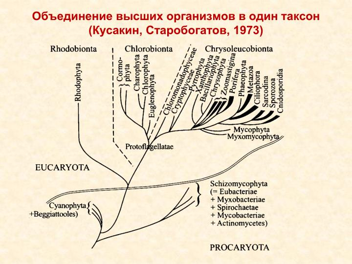 Объединение высших организмов в один таксон (Кусакин, Старобогатов, 1973)