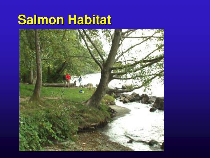 Salmon Habitat