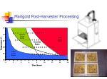 marigold post harvester processing