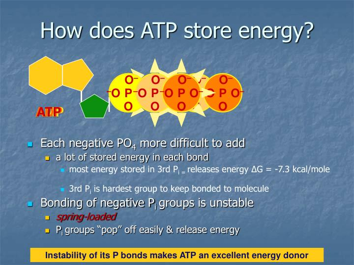 How does ATP store energy?