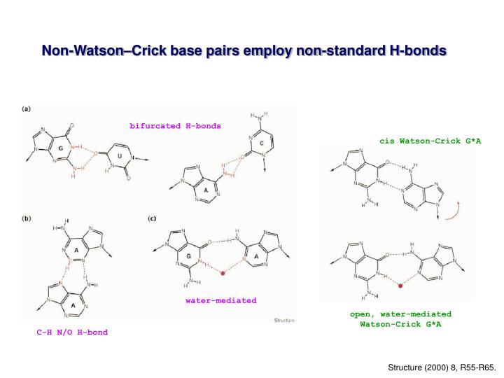 Non-Watson–Crick base pairs employ non-standard H-bonds