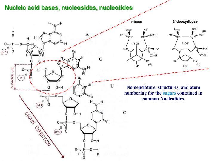Nucleic acid bases, nucleosides, nucleotides