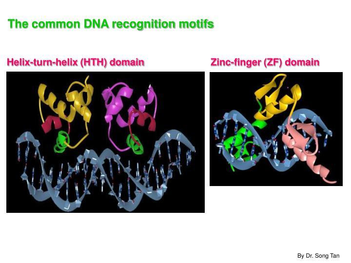 Helix-turn-helix (HTH) domain