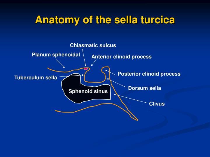 PPT - Sella turcica and parasellar region PowerPoint Presentation ...