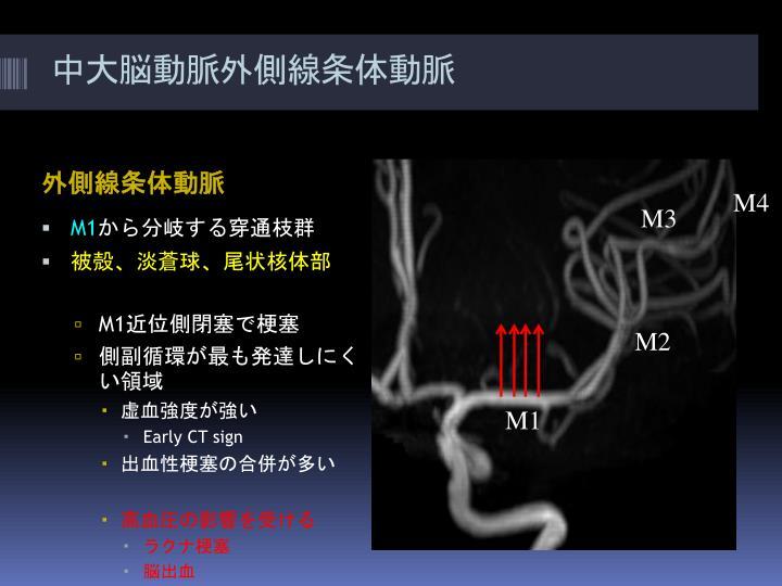 ppt - willis  u52d5 u8108 u8f2a  u3068 u4e3b u8981 u5206 u679d powerpoint presentation