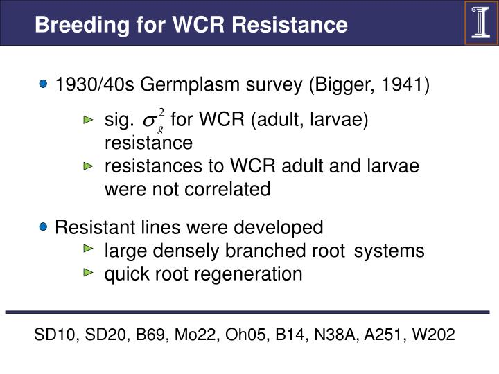 Breeding for WCR Resistance