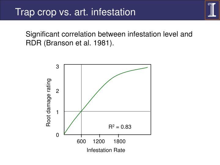 Trap crop vs. art. infestation