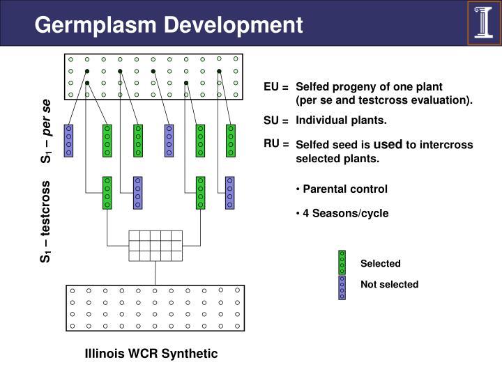 Germplasm Development