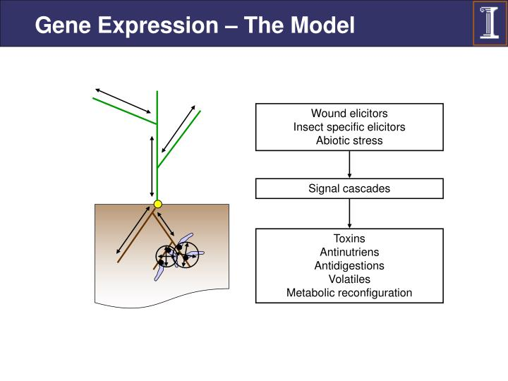 Gene Expression – The Model