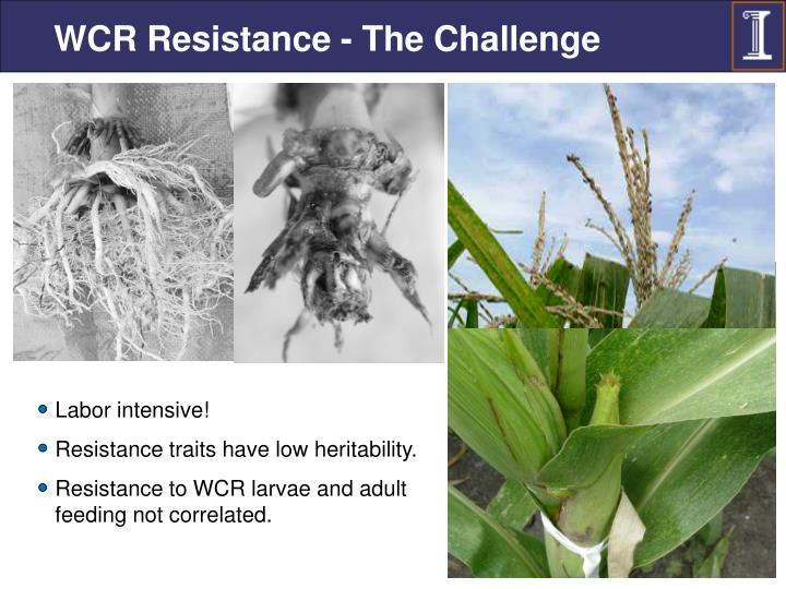 WCR Resistance - The Challenge
