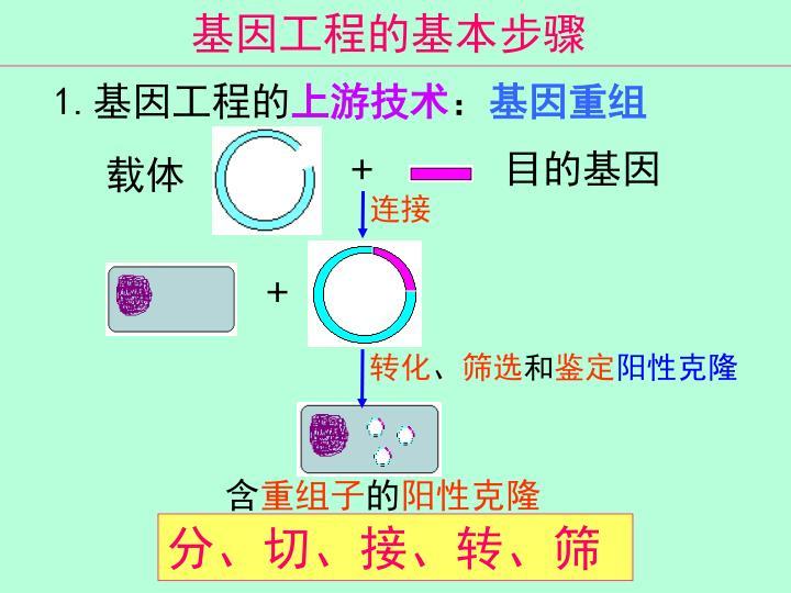 基因工程的基本步骤
