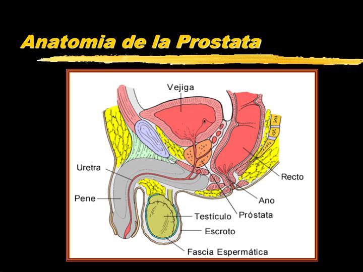 PPT - Presentación descargada del sitio: es.geocities/tuten_unap ...