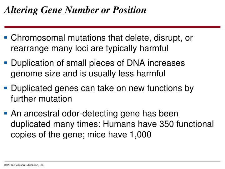Altering Gene Number or Position