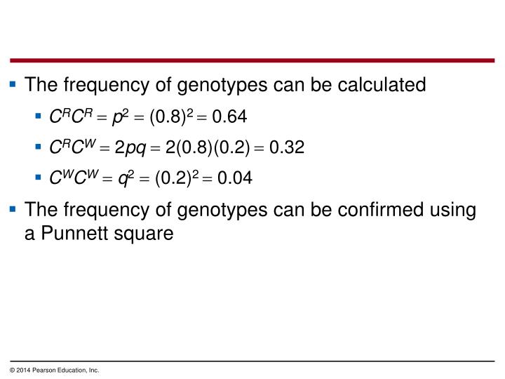 The frequency of genotypes can be calculated