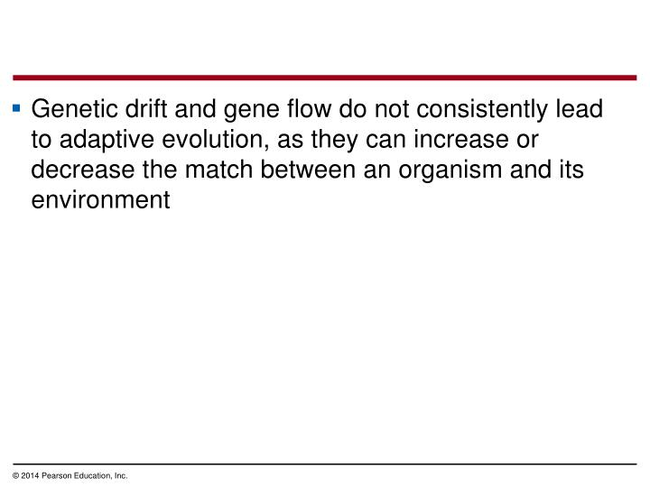 Genetic drift and gene flow do not consistently lead to adaptive evolution, as they can increase or decrease the match between an organism and its environment