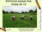 entretien manuel d un champ de riz