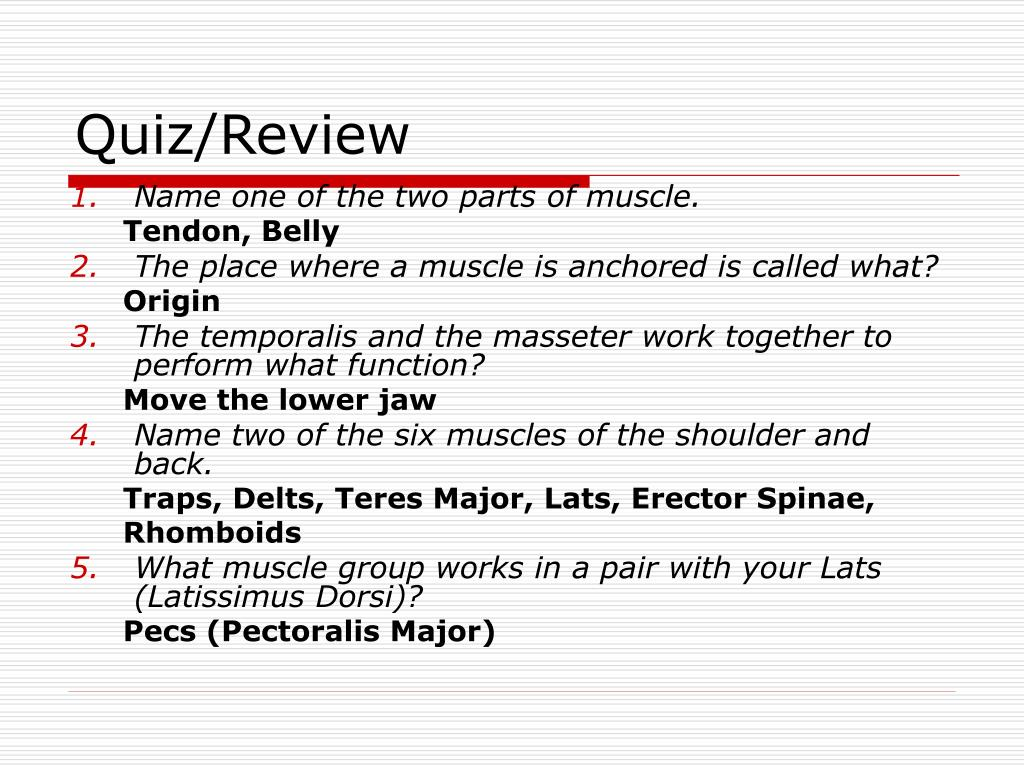 PPT - Muscles in the Shoulder, Chest, Arm, Stomach, and Back