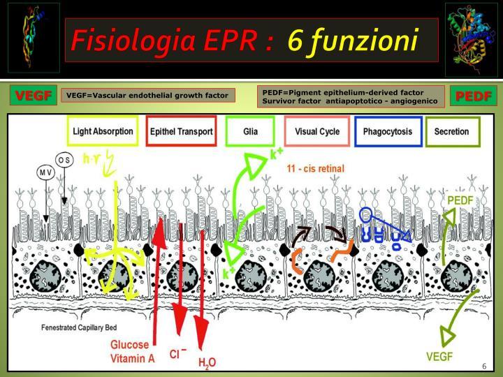 Fisiologia EPR :