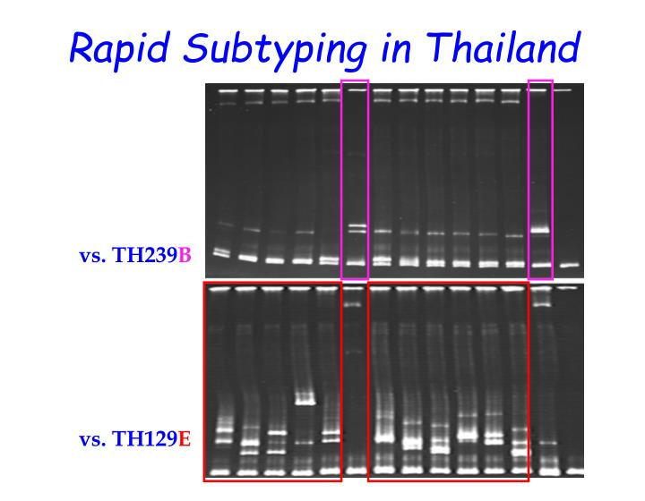 Rapid Subtyping in Thailand
