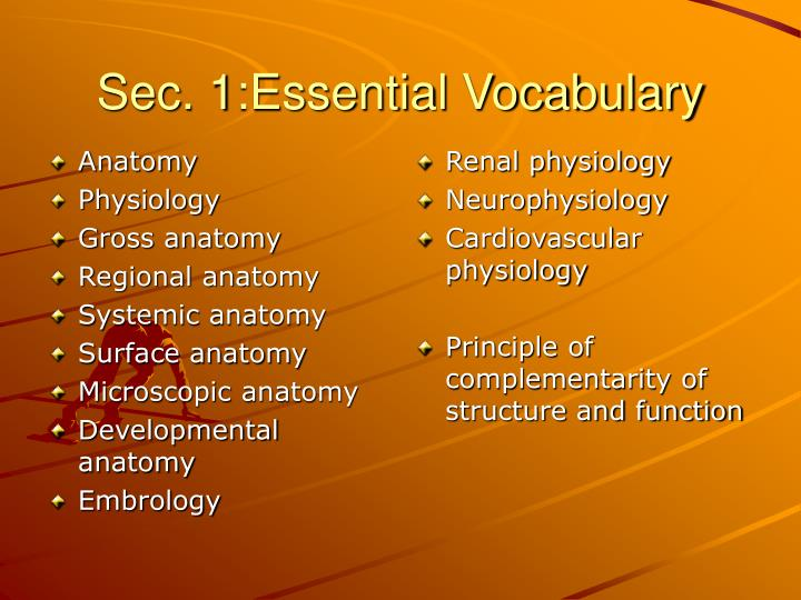 PPT - Anatomy and Physiology PowerPoint Presentation - ID:4579870