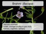 brahmi bacopa1
