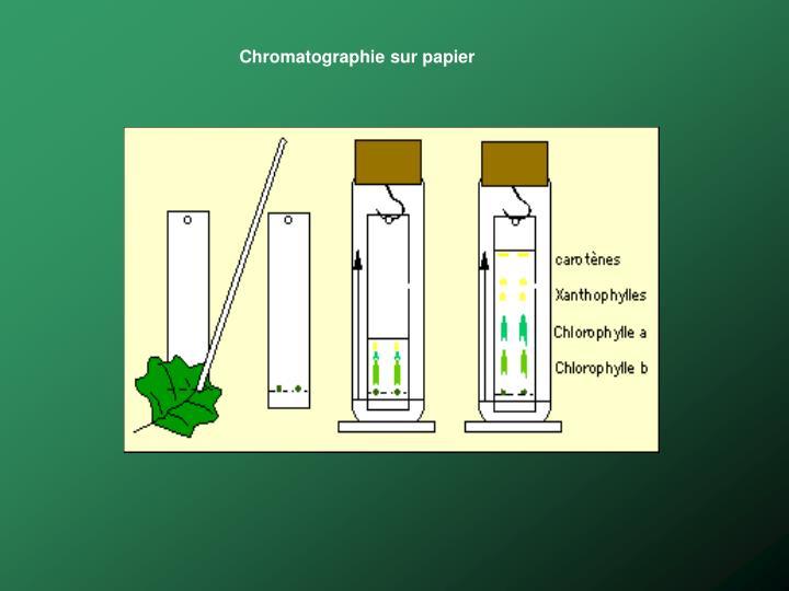 Chromatographie sur papier