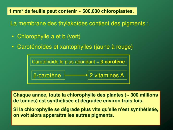 Caroténoïde le plus abondant =