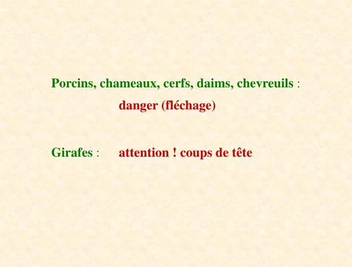Porcins, chameaux, cerfs, daims, chevreuils
