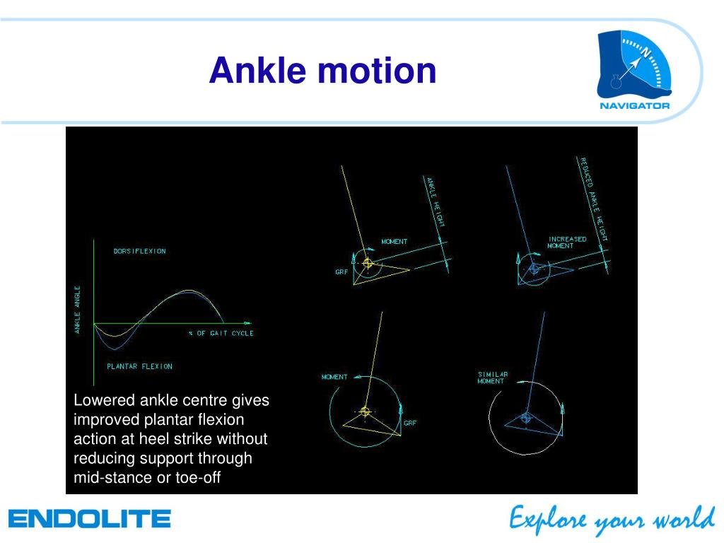 PPT - The Navigator Foot PowerPoint Presentation - ID:4584370
