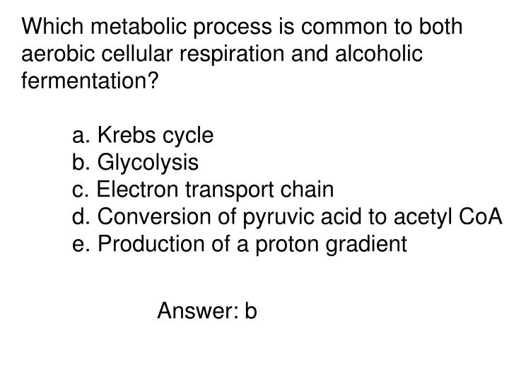 Which metabolic process is common to both