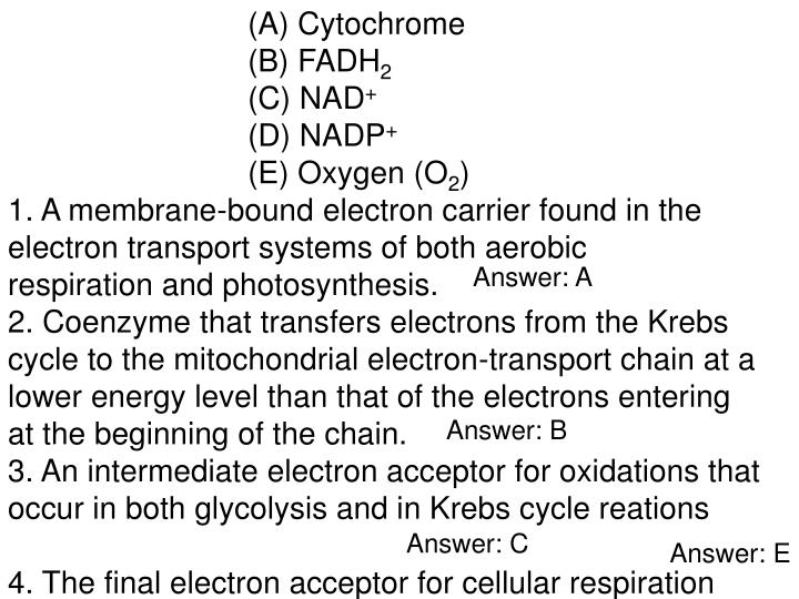 (A) Cytochrome