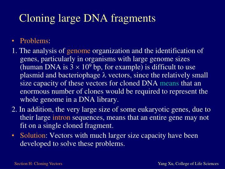 Cloning large DNA fragments