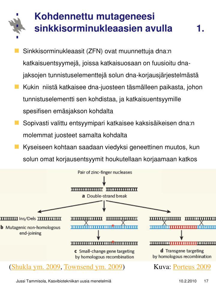 Kohdennettu mutageneesi sinkkisorminukleaasien avulla         1.