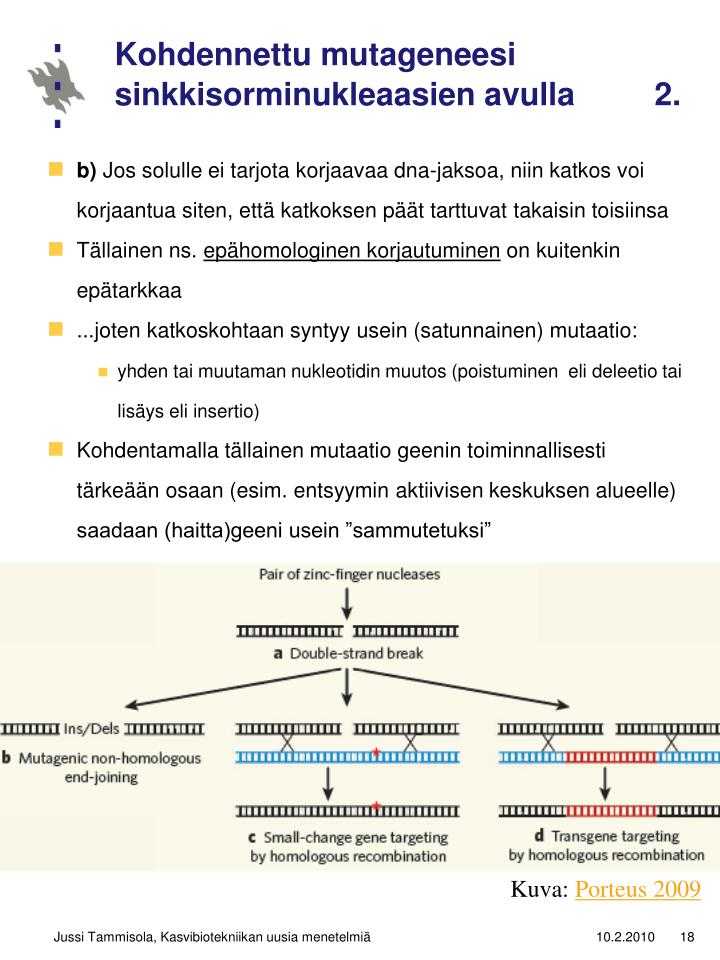 Kohdennettu mutageneesi sinkkisorminukleaasien avulla         2.