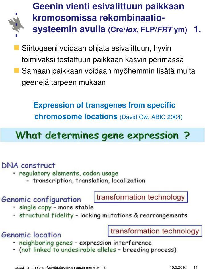 Geenin vienti esivalittuun paikkaan kromosomissa rekombinaatio-systeemin avulla