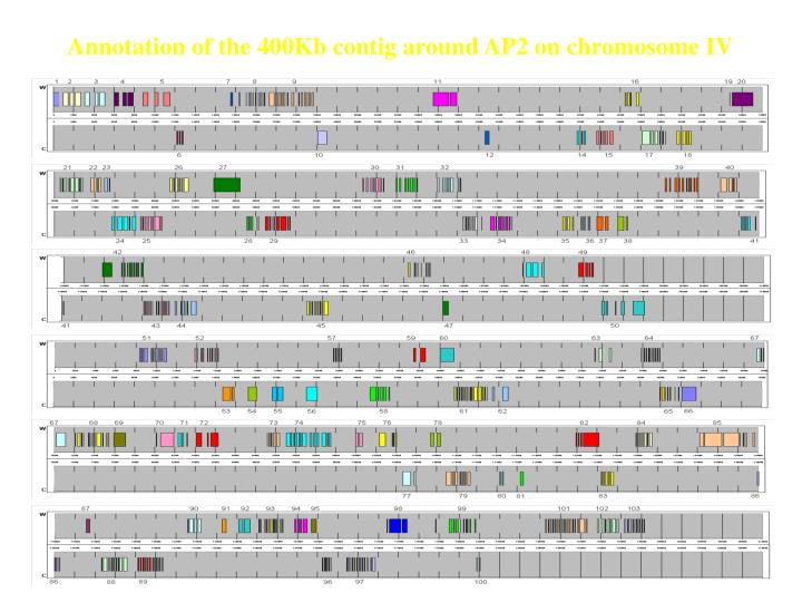 Annotation of the 400Kb contig around AP2 on chromosome IV
