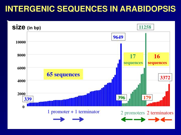 INTERGENIC SEQUENCES IN ARABIDOPSIS