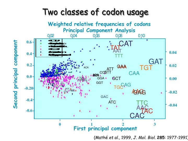 Weighted relative frequencies of codons
