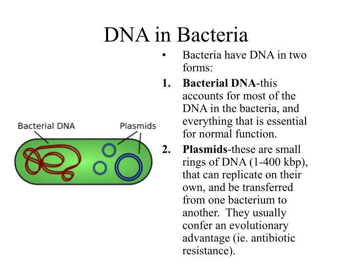 Ppt dna the blueprint for life powerpoint presentation id4585991 dna in bacteria malvernweather Images