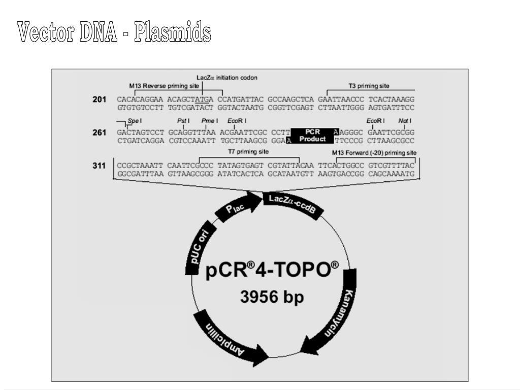 PPT - Hosts & Vector PowerPoint Presentation - ID:4586002