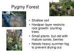 pygmy forest