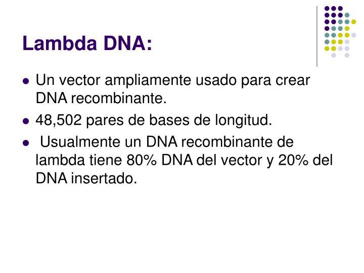 Lambda DNA: