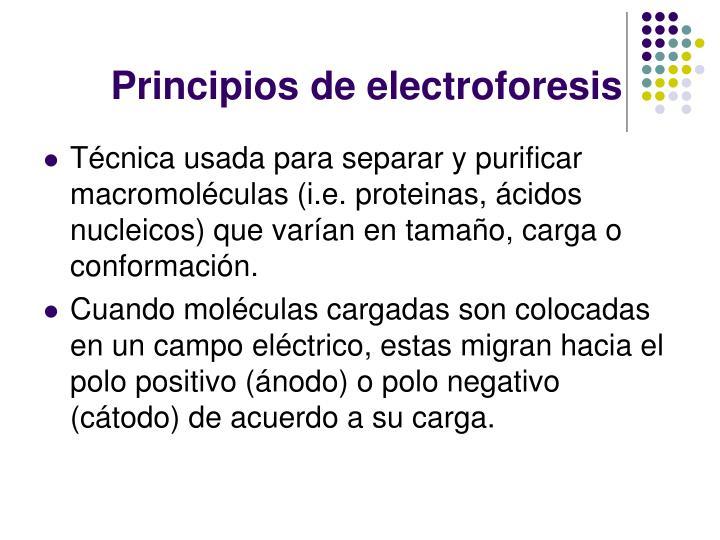 Principios de electroforesis