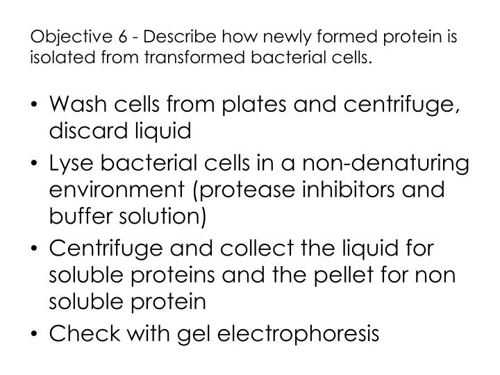 Objective 6 - Describe how newly formed protein is isolated from transformed bacterial cells.