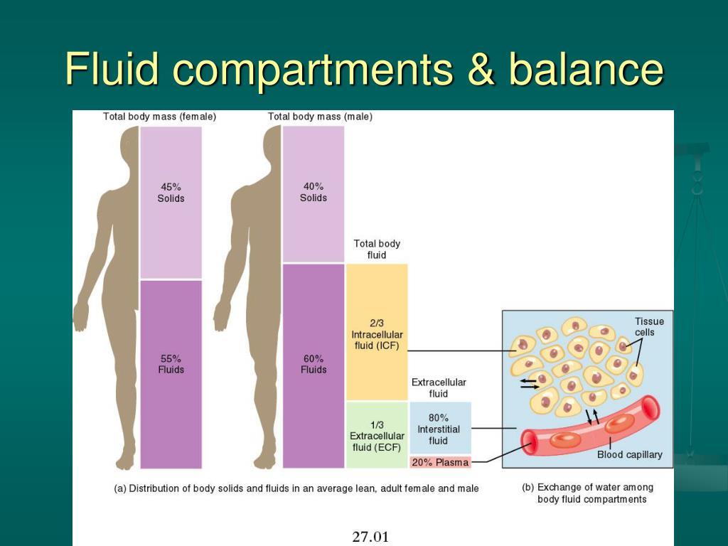Pdf body fluids and fluid bodies