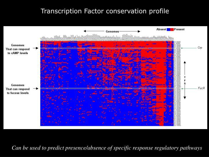 Transcription Factor conservation profile