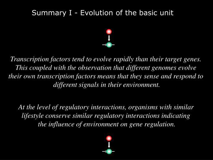 Summary I - Evolution of the basic unit