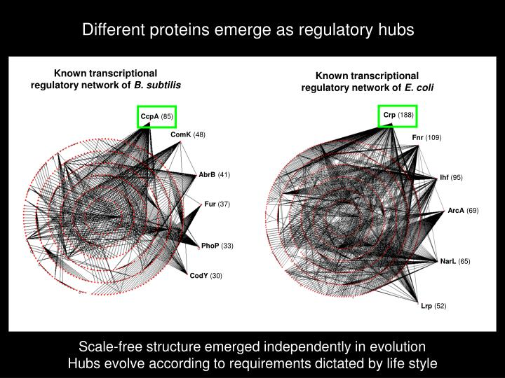 Different proteins emerge as regulatory hubs